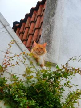 Kat in de stad