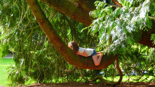 Kinderen in naaldbomen