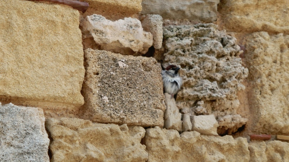 Musje in de muur