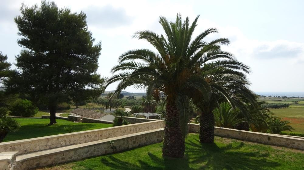 Palmbomen Masseria Panareo