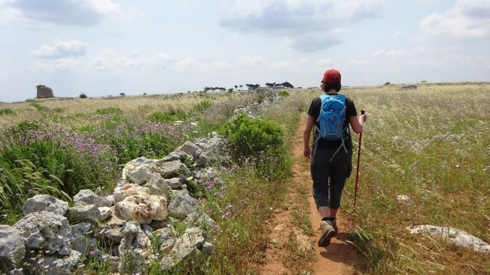 Wandelen in de velden