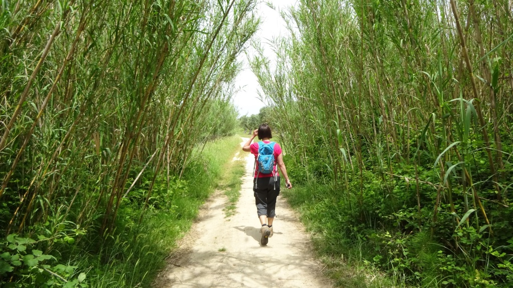 Wandelen tussen bamboe