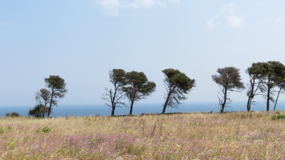 Wuifende bomen