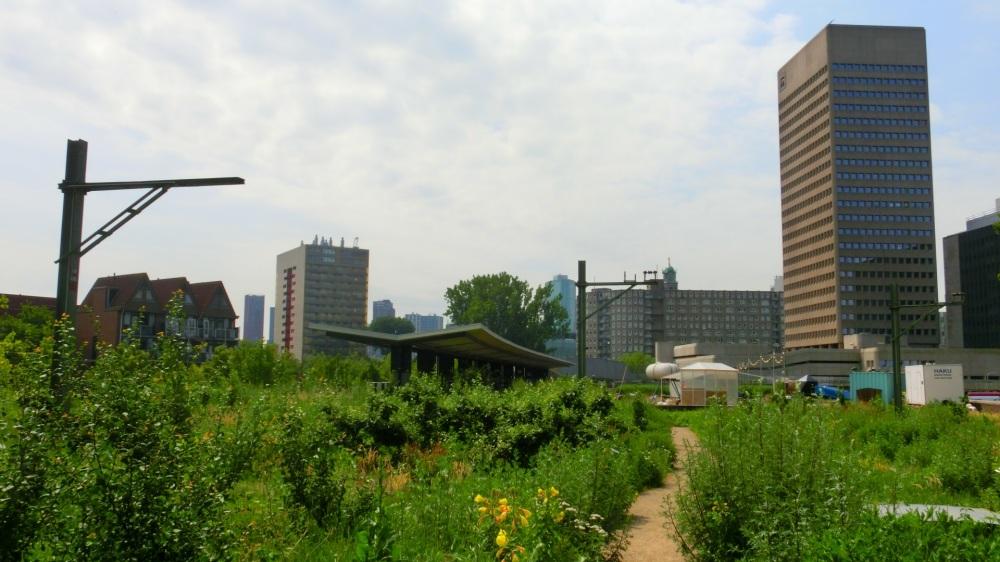 Tuin van Hofbogen