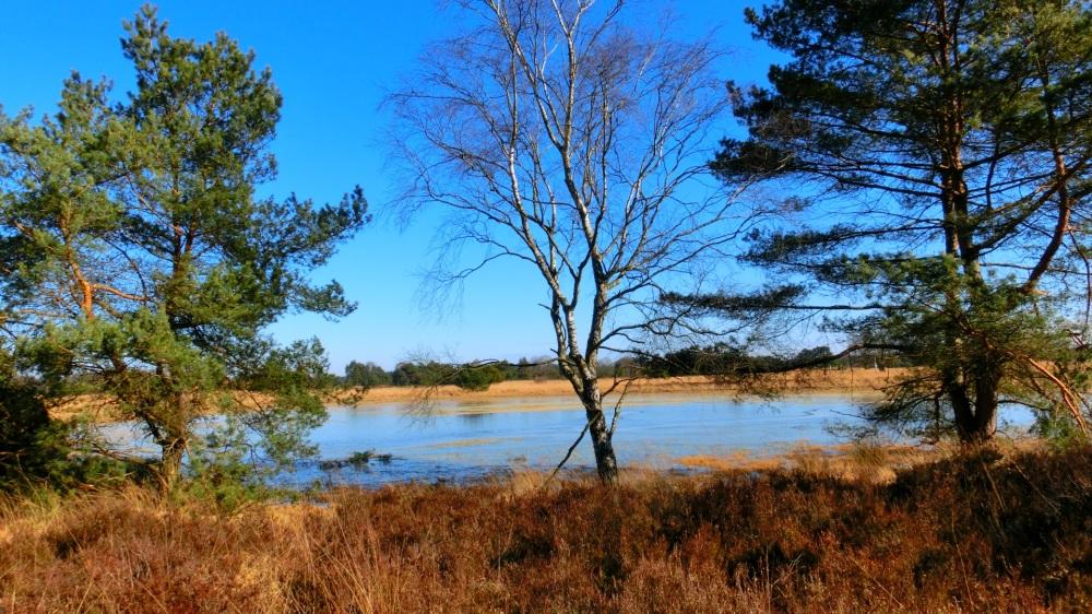 NS wandeling Oisterwijk Boxtel