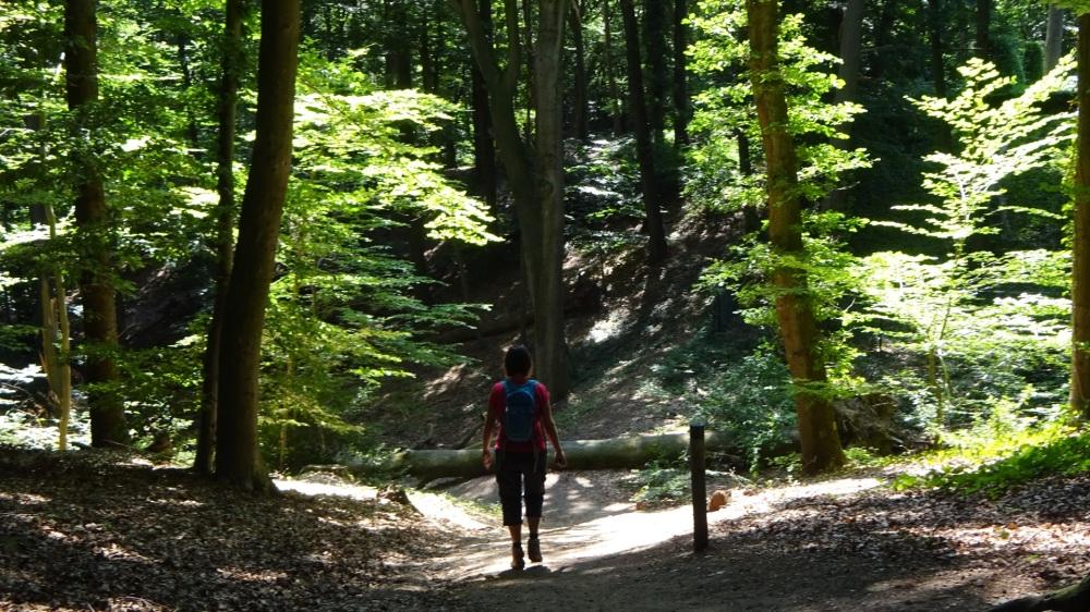 Wandelen onder de hoge bomen