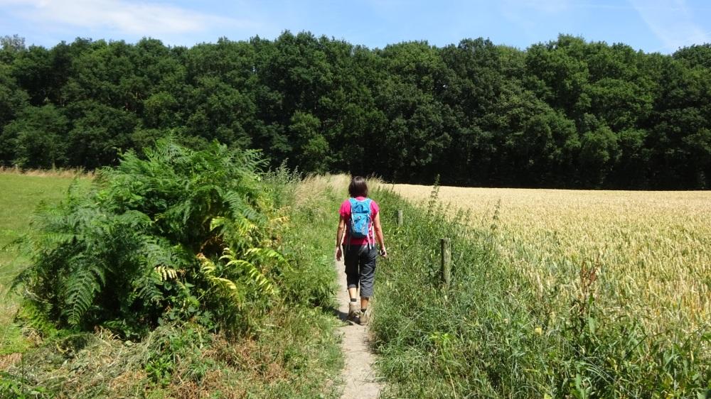 Wandelen tussen velden