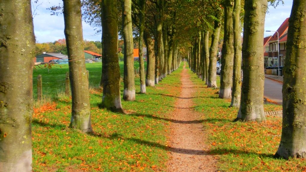Weg tussen de bomen