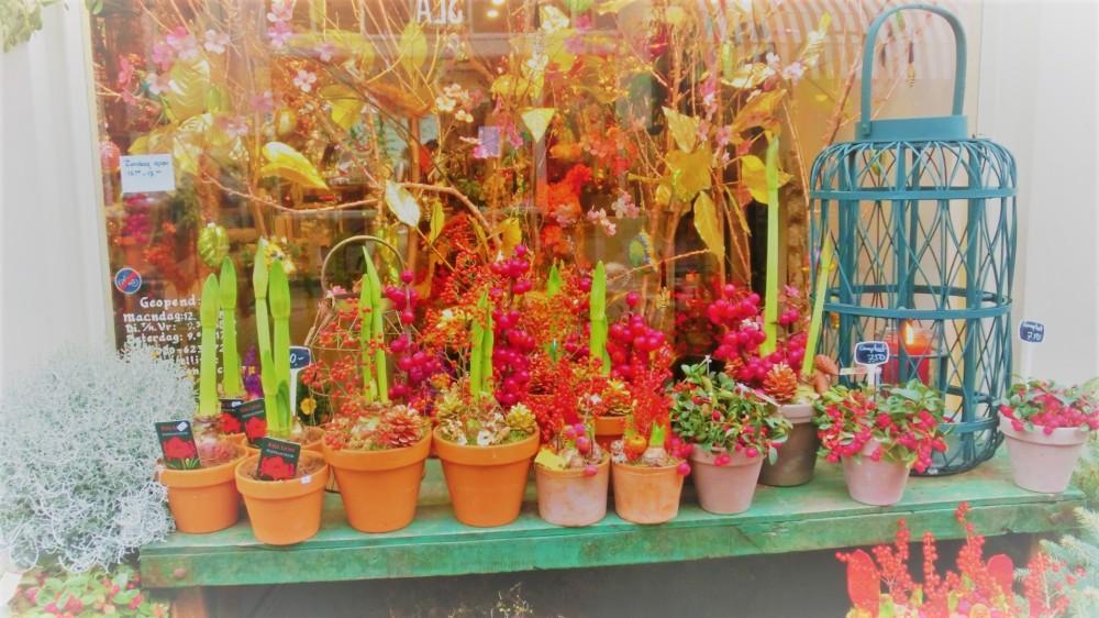 Kerstbloemen en planten