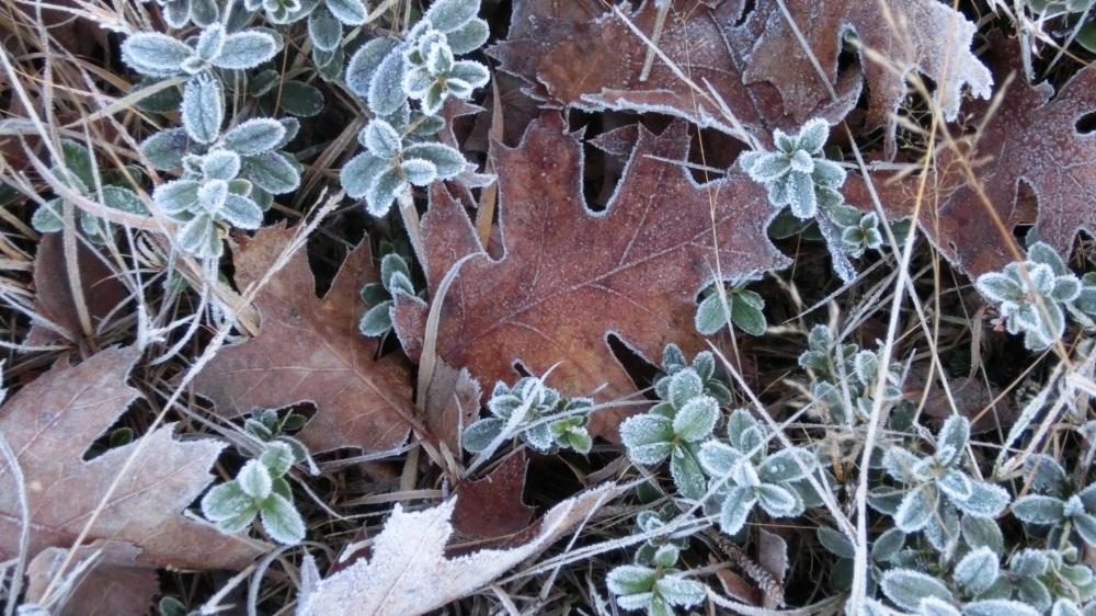 bevroren bladeren