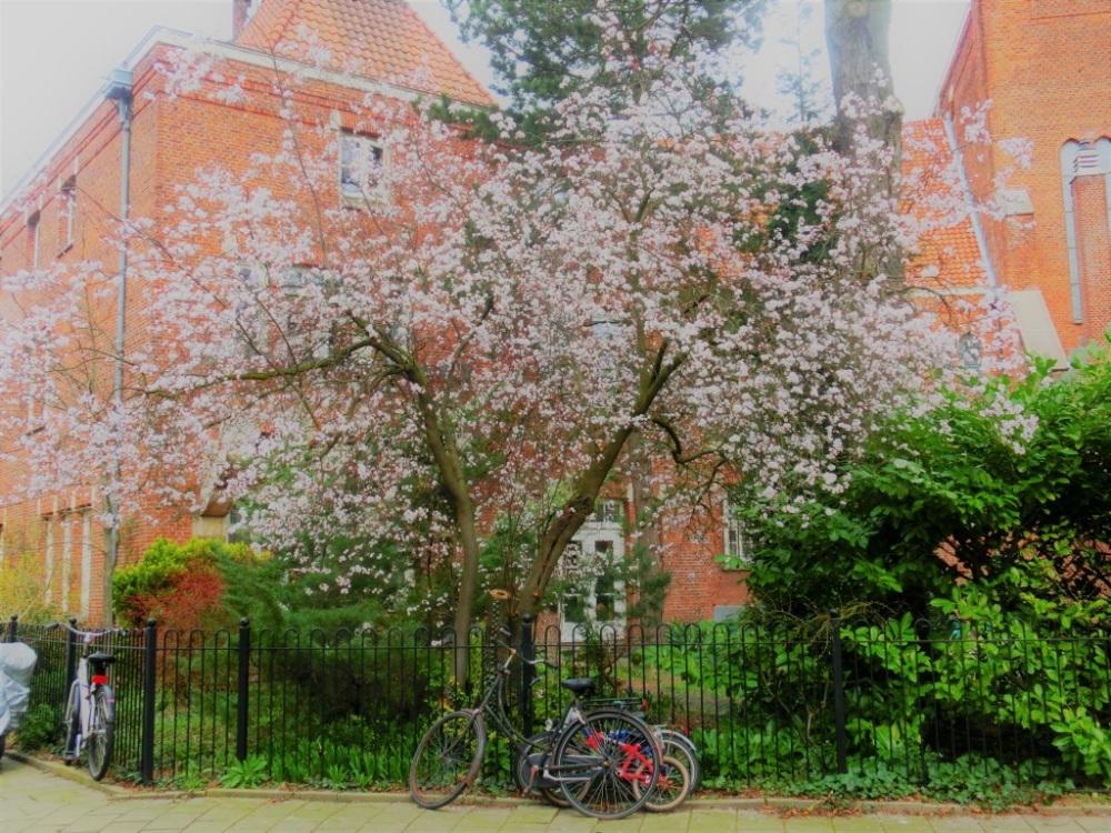 Hof met lente uitstraling