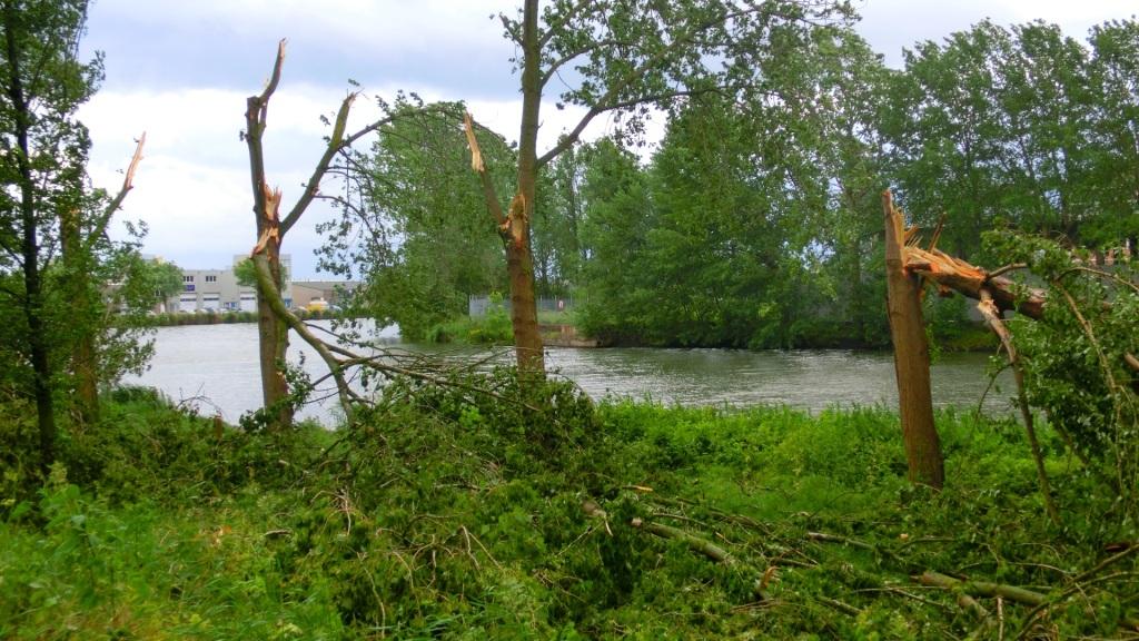 Bomen beschadigd door de wind