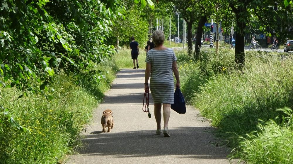 Wandelen langs de Haagse Beek