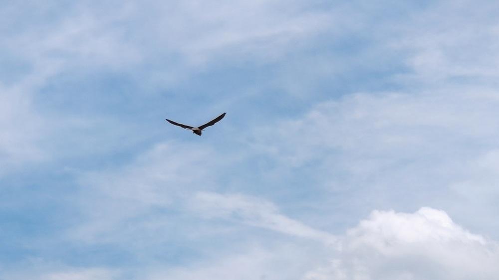 Biddende roofvogel