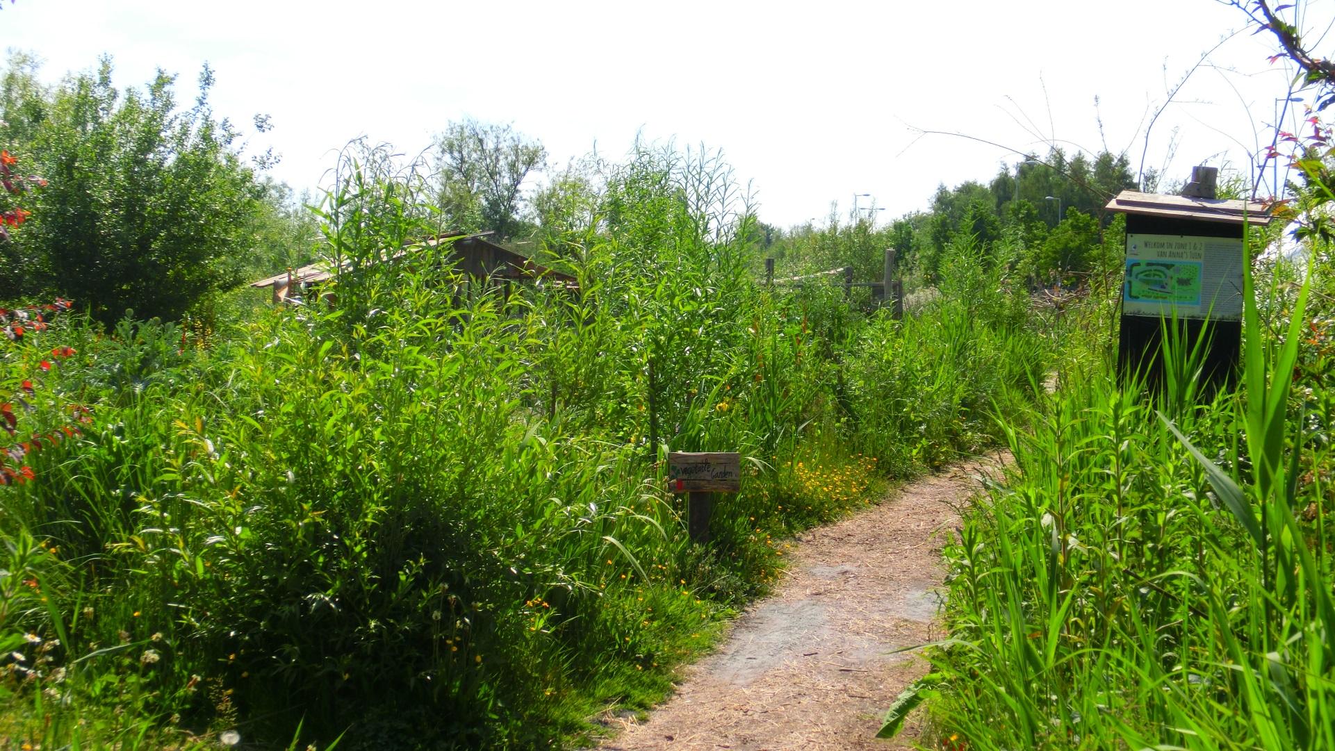 Paden langs wilde planten