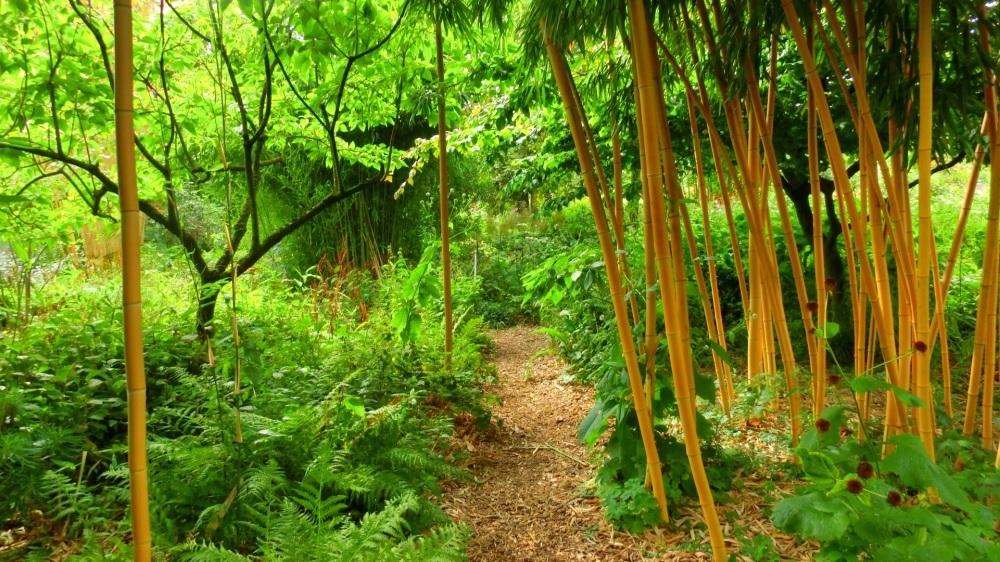 Varens en bamboe