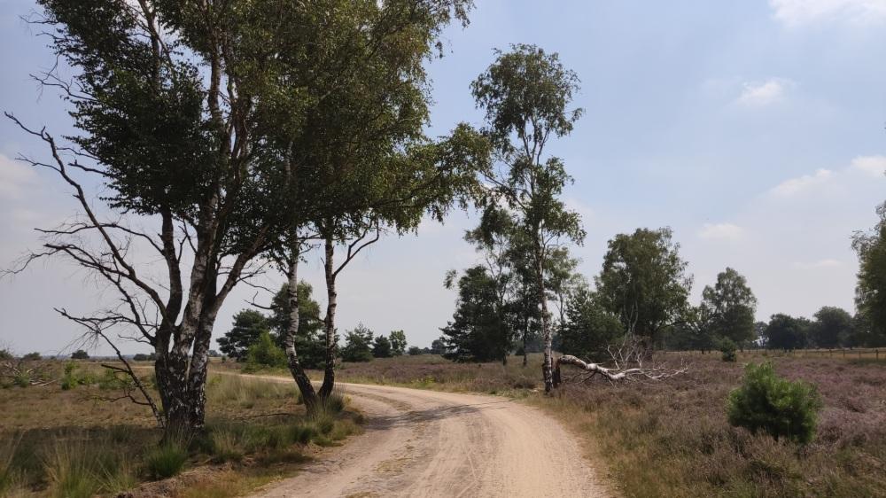 Heide met hier en daar een boom
