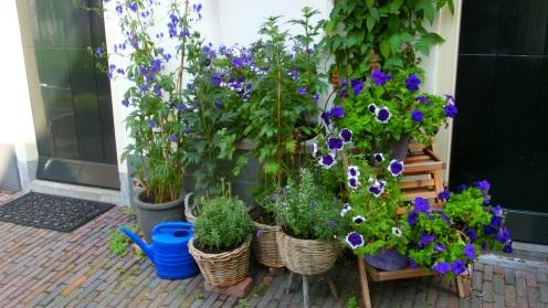 Planten in Samuel de Zee's hofje